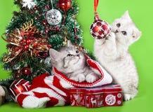 Gatitos de la Navidad que juegan con las bolas imagen de archivo