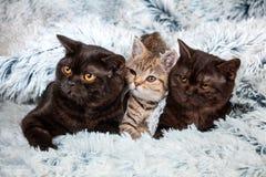 Gatitos del árbol en una manta Fotografía de archivo libre de regalías