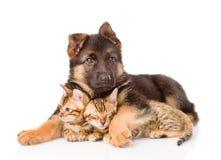 Gatitos del abarcamiento del perro de perrito pequeños Aislado en el fondo blanco Imagen de archivo
