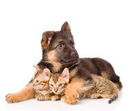 Gatitos del abarcamiento del perro de perrito pequeños Aislado en el fondo blanco Imagenes de archivo