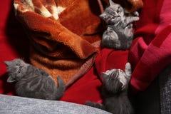 Gatitos del bebé en una manta Fotos de archivo