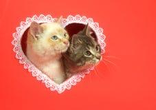 Gatitos del día de tarjetas del día de San Valentín con el espacio de la copia Foto de archivo