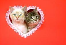 Gatitos del día de tarjetas del día de San Valentín con el espacio de la copia Imagen de archivo