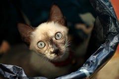 Gatitos del gato Fotos de archivo libres de regalías