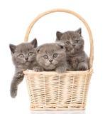 Gatitos del grupo en la cesta que mira la cámara Aislado en blanco Imagen de archivo