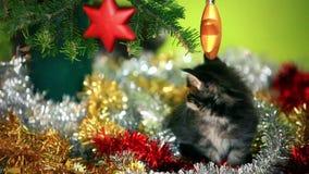 Gatitos del mapache de Maine que juegan debajo del árbol de navidad almacen de metraje de vídeo