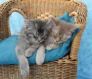 Gatitos dormidos en una silla Fotos de archivo