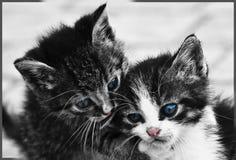 Gatitos dulces Imagenes de archivo