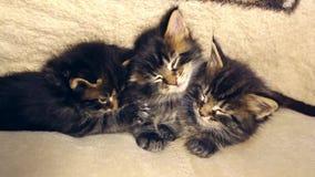 Gatitos dulces divertidos que duermen junto metrajes