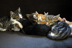 Gatitos el dormir Imagen de archivo libre de regalías