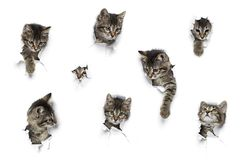 Gatitos en agujeros Imágenes de archivo libres de regalías