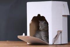 Gatitos en caja imagen de archivo libre de regalías