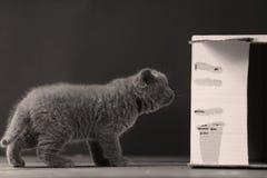 Gatitos en caja fotografía de archivo