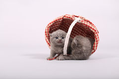 Gatitos en cajones de madera Foto de archivo libre de regalías
