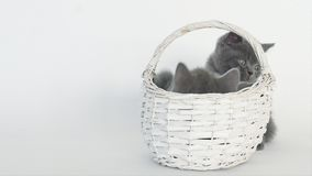 Gatitos en cesta almacen de video
