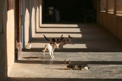 Gatitos en el monasterio Foto de archivo