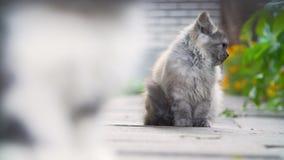Gatitos en el patio trasero almacen de metraje de vídeo