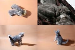 Gatitos en el piso, multicam, pantalla de la rejilla 2x2 Fotografía de archivo