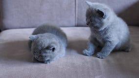 Gatitos en el sofá