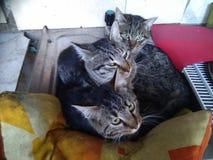 Gatitos en fregadero fotos de archivo libres de regalías