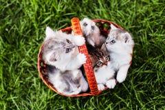 Gatitos en la cesta Fotografía de archivo libre de regalías