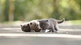 Gatitos en la yarda almacen de video