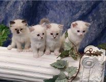 Gatitos en pilar foto de archivo