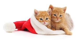 Gatitos en sombrero de la Navidad foto de archivo