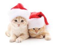 Gatitos en sombreros de la Navidad Imagen de archivo