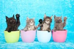 Gatitos en tarros Fotos de archivo