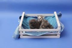 Gatitos en un cajón de madera Foto de archivo libre de regalías