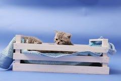 Gatitos en un cajón de madera Fotos de archivo