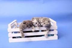 Gatitos en un cajón de madera Fotografía de archivo libre de regalías