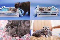 Gatitos en un cajón de madera, pantalla de la rejilla 2x2 del multicam Imagen de archivo