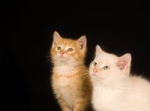 Gatitos en un fondo negro Fotos de archivo