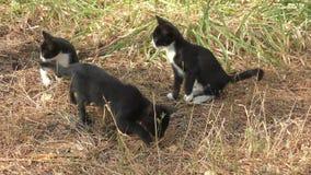 Gatitos en un paseo