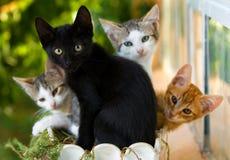 Gatitos en un pote Imágenes de archivo libres de regalías