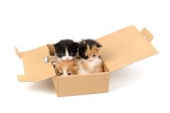 Gatitos en una caja Imágenes de archivo libres de regalías