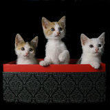 Gatitos en una caja Foto de archivo