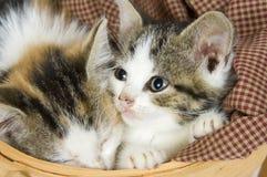 Gatitos en una cesta fotografía de archivo libre de regalías