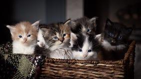Gatitos en una cesta Fotos de archivo