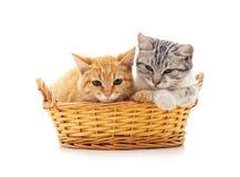 Gatitos en una cesta Imágenes de archivo libres de regalías