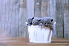 Gatitos en una cesta fotografía de archivo