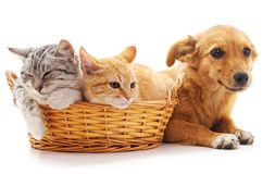 Gatitos en una cesta y perrito Fotografía de archivo libre de regalías