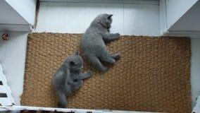 Gatitos en una estera de puerta