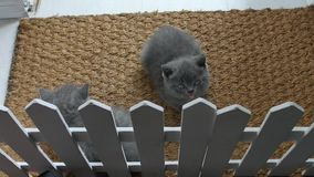 Gatitos en una estera de puerta almacen de video