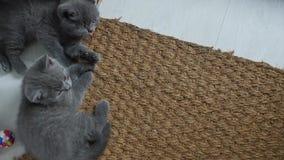 Gatitos en una estera de puerta metrajes