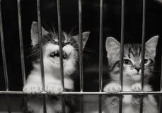 Gatitos en una jaula Imagen de archivo