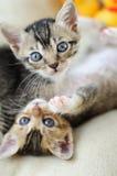 Gatitos encantadores Imagen de archivo libre de regalías