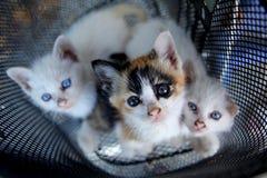 Gatitos encantadores Foto de archivo libre de regalías